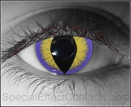 Purple Kitty Special Effect Contact Lenses ~ Halloween !