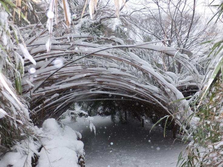 雪の重みでできた竹のトンネル