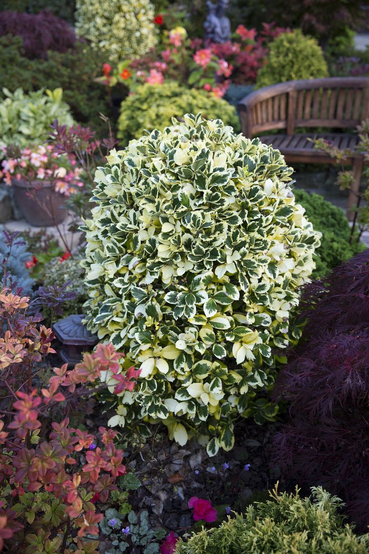 """https://flic.kr/p/zzviX2 