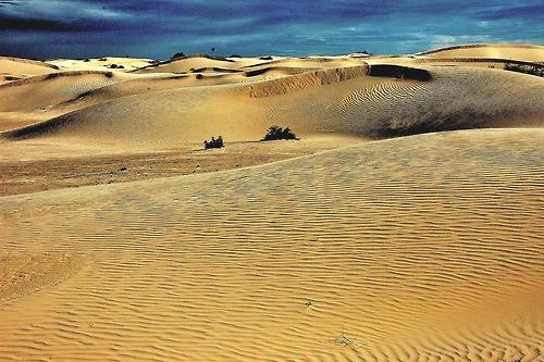 Desierto de Altar, Sonora.