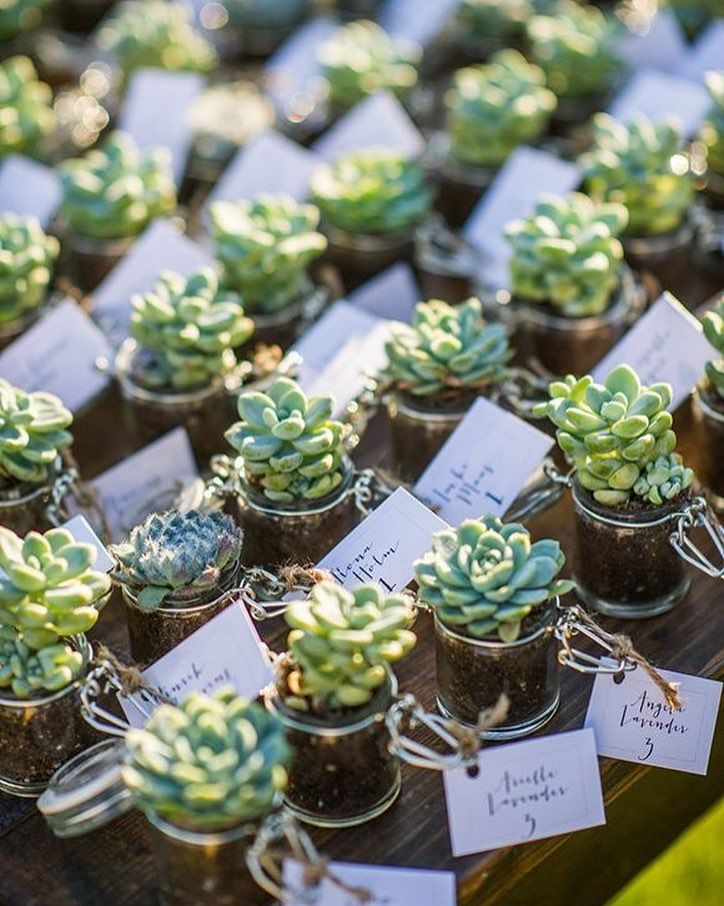 Wedding Favors Tags Singapore : No words for these mini succulents perfect wedding favors # ...