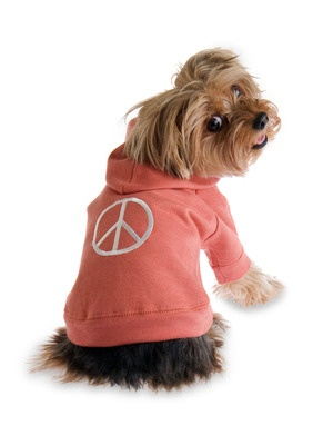Grroovvy Orange Dog Hoodie by Ruffluv on Gilt Home