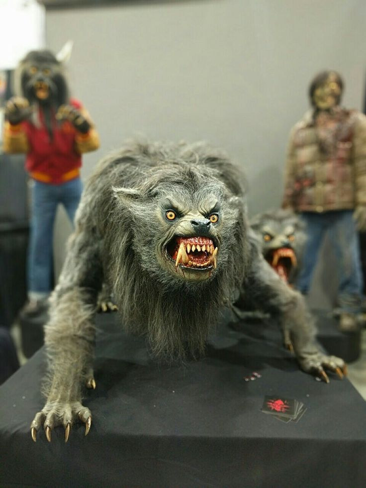 werewolf a werewolf Werewolf: werewolf,, in european folklore, a man who turns into a wolf at night  and devours animals, people, or corpses but returns to human form by day.