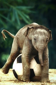 Süße Tierbilder: 100 der süßesten Tiere!   – Elephants
