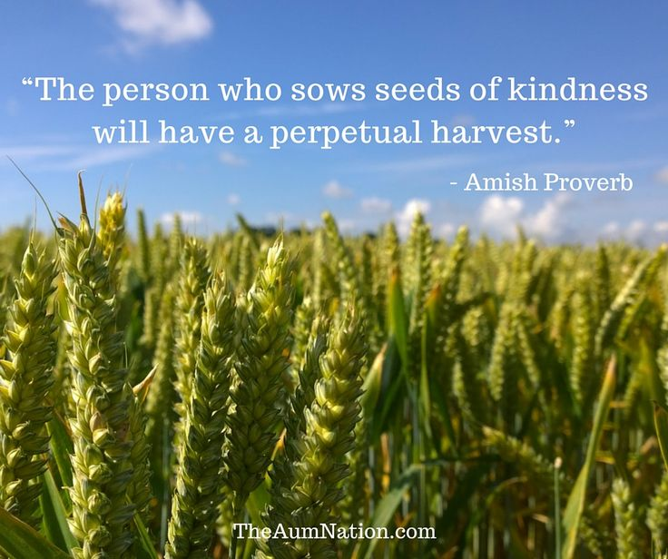 """The person who sows seeds of kindness will have a perpetual harvest."" - Amish Proverb"