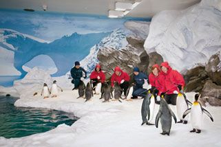 Penguin Encounter At Sea World, Gold Coast QLD