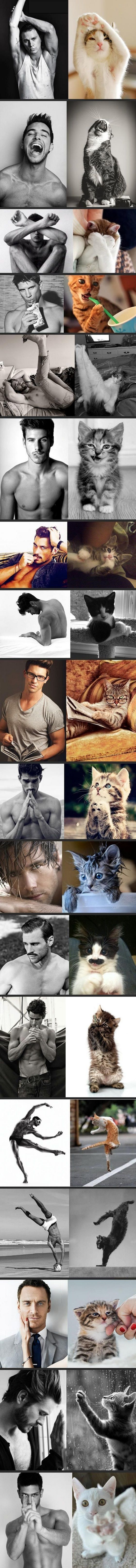 Can you spot the difference between these hot guys and cats?