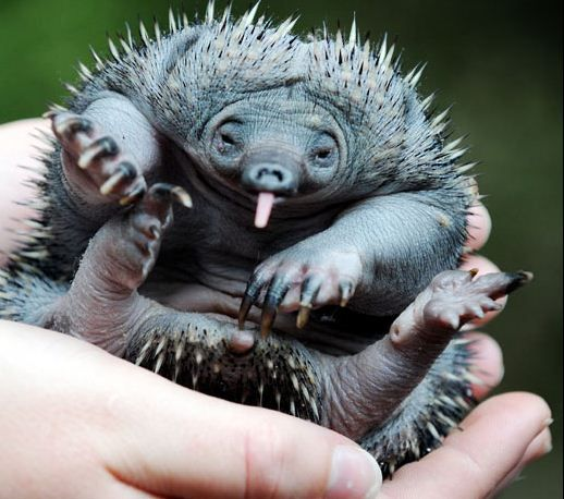 The Baby Animals of Australia Are Adorable!