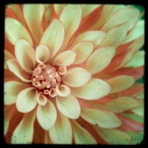 Vintage, Petals, Pattern, Nature - Creme de menthe