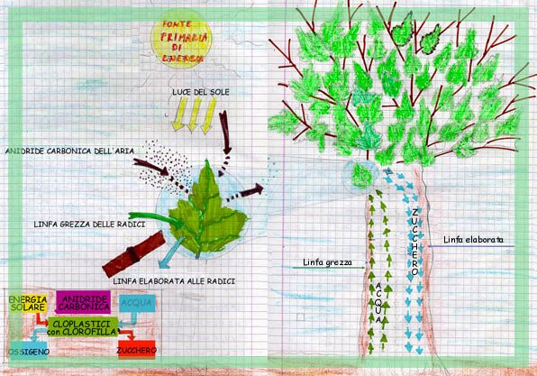 fotosintesi clorofilliana scuola primaria - Cerca con Google