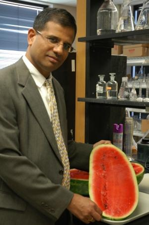 Watermelon May Have Viagra-Effect.. Scientists say watermelon has ingredients that deliver Viagra-like effects to the body's blood vessels and may even increase libido.