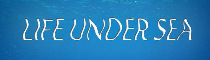 Life Under Sea