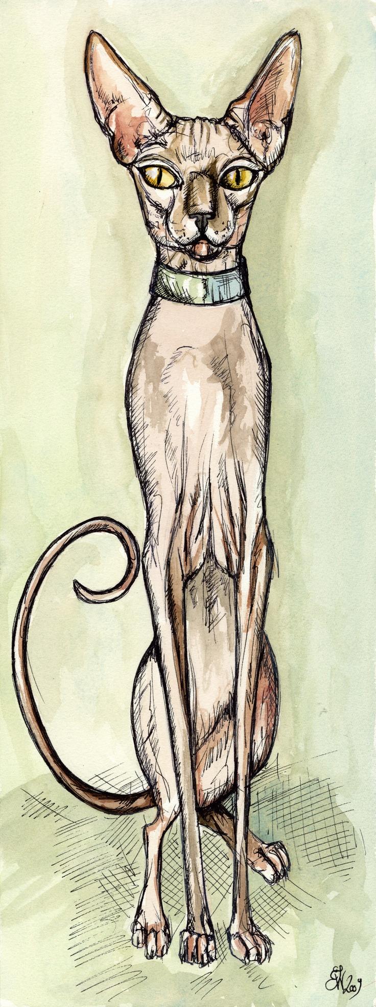 Sphynx Cat - A Little Curiosity- by Elle J. Wilson