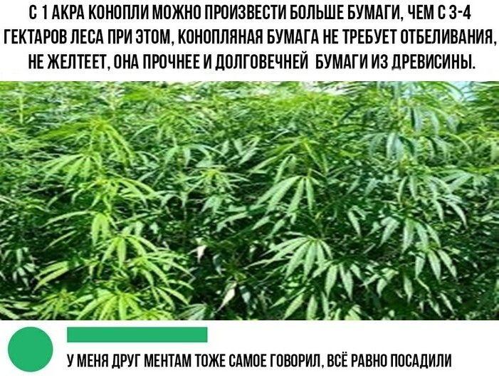 Шутка о конопле лечебное масло марихуаны