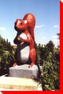 Eddie the Squirrel   Edson, Alberta