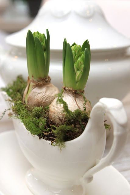 hyacinth in a gravy boat
