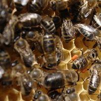 Salone di miele | Slow Food - Buono, Pulito e Giusto.
