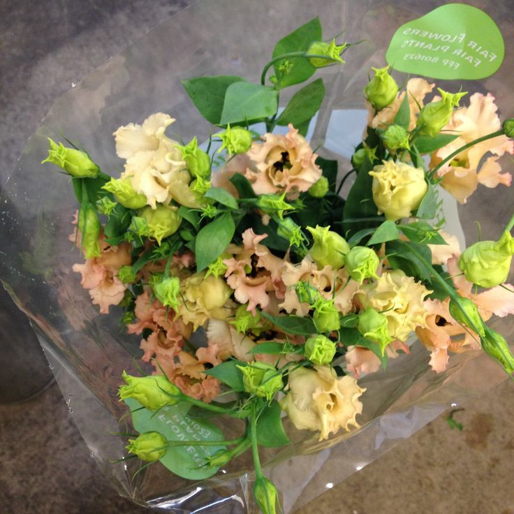 Lisianthus called 'Falda Apricot' sold in bunches of 10 stems from the Flowermonger the wholesale floral home delivery service.