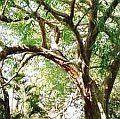 Парфюмерная нота розовое дерево подробнее / more info: http://www.imagine-parfum.ru/note_info.php?id=221&main_razdel=aroma_notes