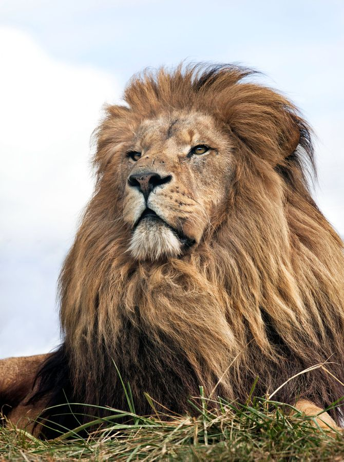 941 Best Images About In Memory Of Cecil Big Cats On
