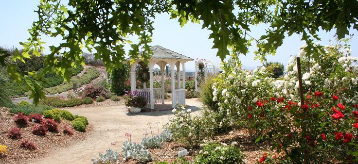 Waterwise Botanicals has a new website! - Plant Nursery San Diego, Plant Growers And Sellers of Waterwise Plants in San Diego, Garden Design