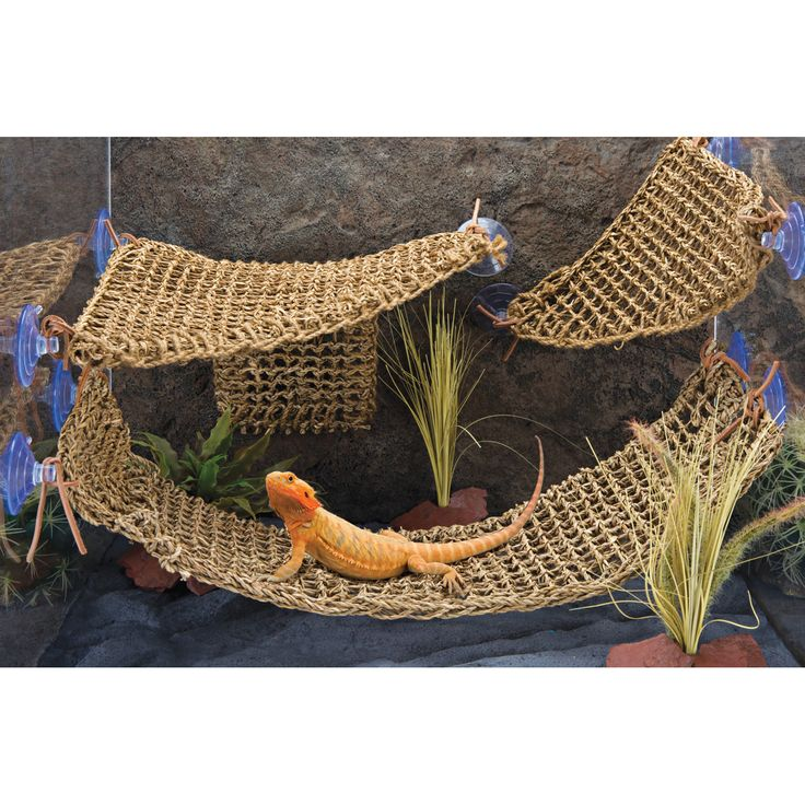 It attaches to both glass and acrylic terrarium walls with the included suction cups, enabling you to position it just about anywhere. Penn Plax's Reptology Natural Lizard Lounger provides a comfortab