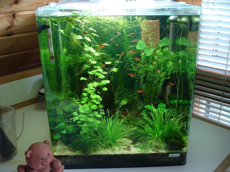 die besten 25 nano aquarium ideen auf pinterest. Black Bedroom Furniture Sets. Home Design Ideas