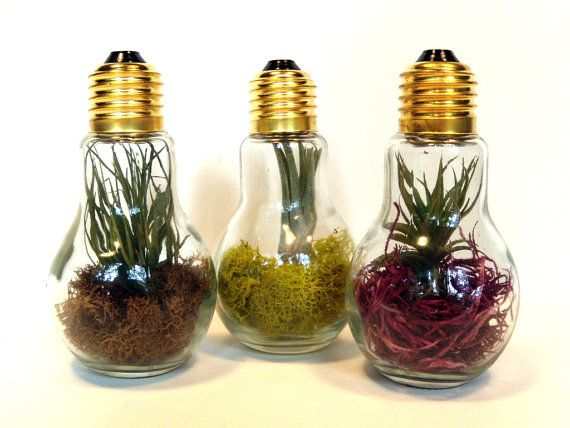 Light Bulb Terrarium Trio Three Different by OpticalConclusions