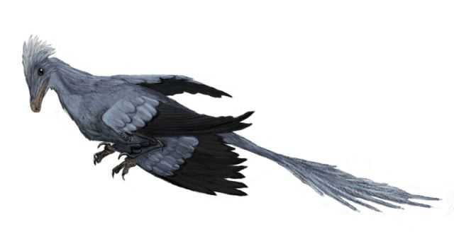 "Meet Microraptor, the World's Smallest Dinosaur: Microraptor Was an Evolutionary ""Dead End"""