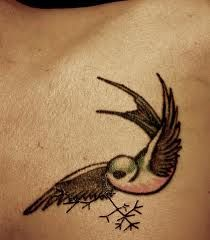 charles darwin tattoo