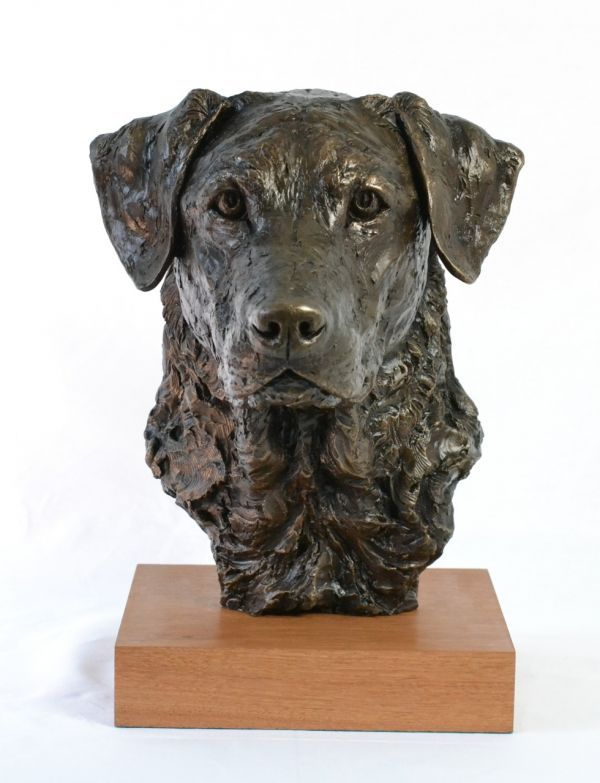 Cold Cast Bronze #sculpture by #sculptor Tanya Russell titled: 'Labrador Portrait (Commission Lifelike Head sculpture)'. #TanyaRussell
