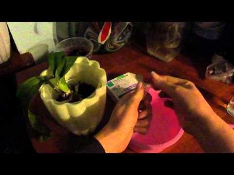 Витаминный коктейль для орхидей. Как восстановить тургор у листьев орхидеи. №1 - YouTube
