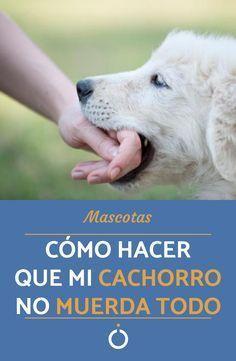 Cómo hacer que mi cachorro no muerda todo - TRUCOS Y CONSEJOS   #Mascotas #Perros #Adiestramiento Love Pet, Puppy Love, Vet Help, Animals And Pets, Cute Animals, Hunter Dog, Dog Crafts, Dog Hacks, Goldendoodle