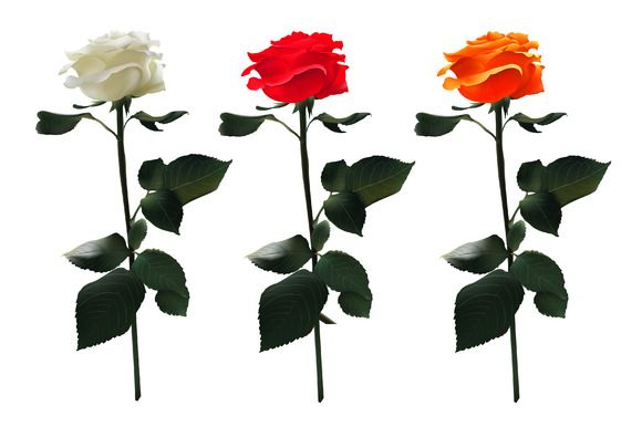 These roses are very simple yet they have a settle gradient to give it the soft petal effect.