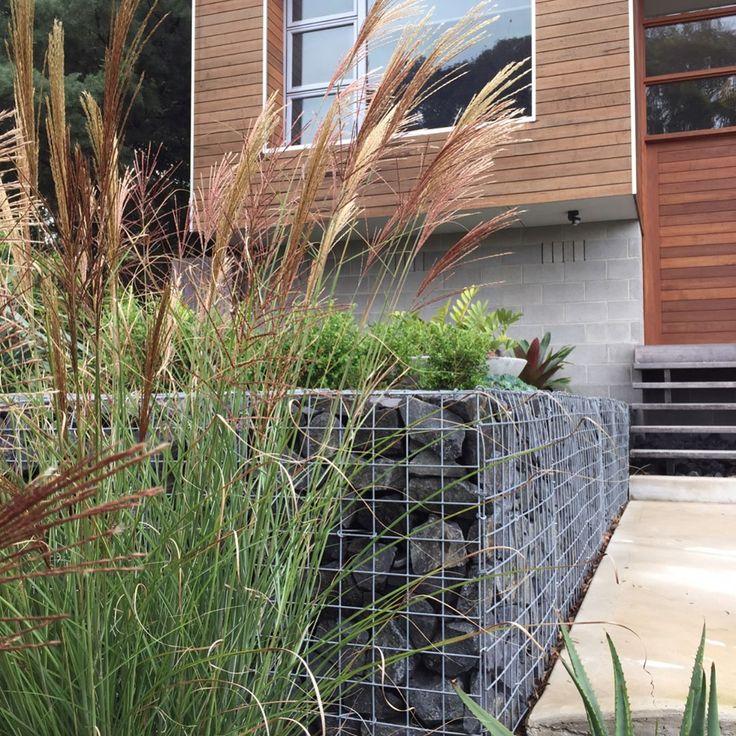 Popped in for a maintenance check today at our Merimbula garden. All filling in 👌  #podgardens #merimbula #begavalley #farsouthcoast #nsw #gardendesign #exterior #homedesign #conceptdesign #design #garden #outdoors #landscape #landscapedesign #steppingstones #retainingwalls #gabionwall #dkmerimbula