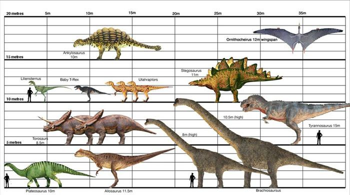HERE IS A DINOSAUR SIZE CHART | Identification Guides ...