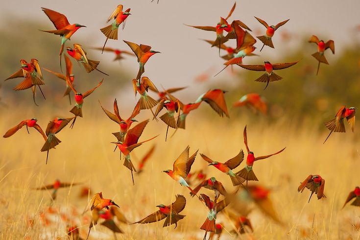 Красочный мир птиц | Обои с птицами