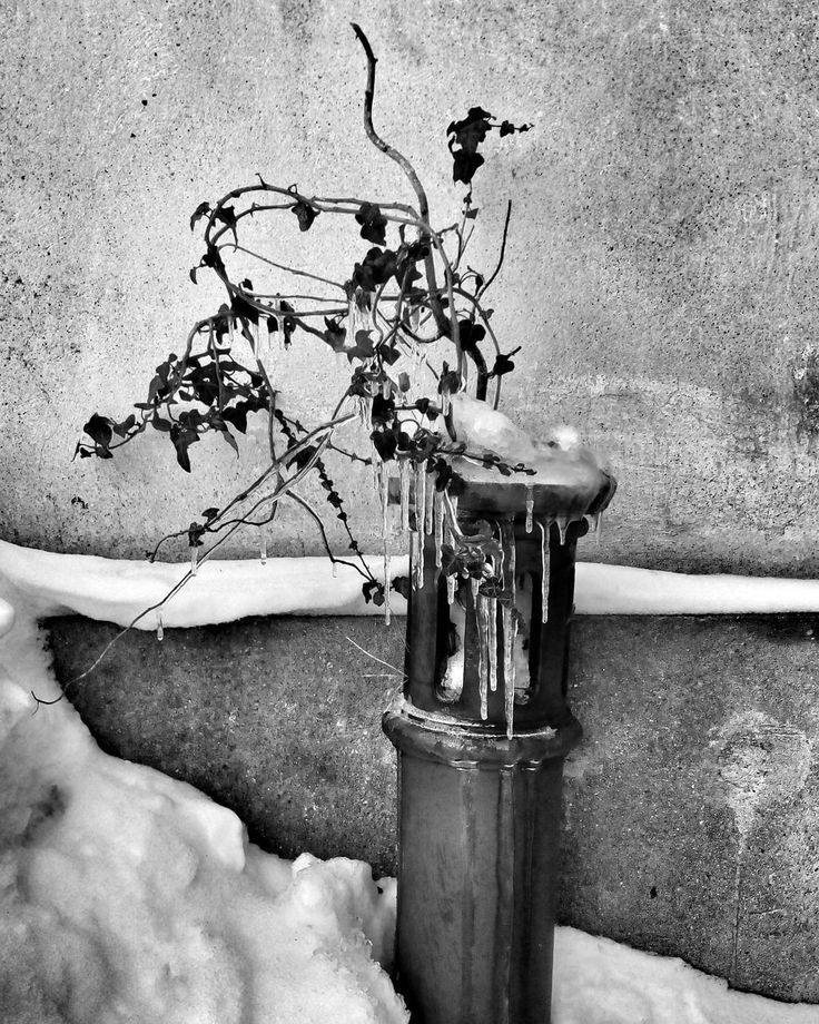 #hedera #helix #ice #winter #snow #blackandwhite #blackandwhitephotography #mobilephotography #reichenberg #liberec #libereckykraj #instadialy #insta_czech #igraczech #czech_world #czech_insta