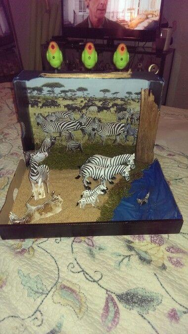 Zebra diarama   school projects   Diorama kids, Animal ...