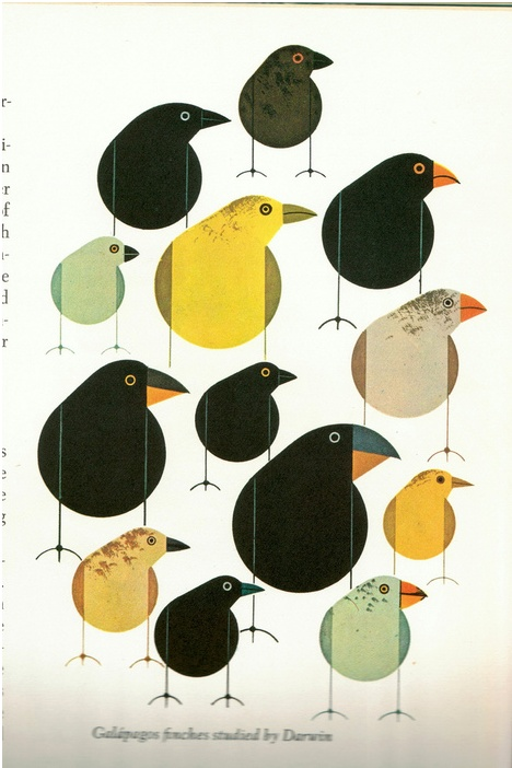 #birds: Charlie Harpers, Charli Harpers, Illustrations, Poster, Graphics Design, Charley Harpers, Darwin Finch, Prints, Birds