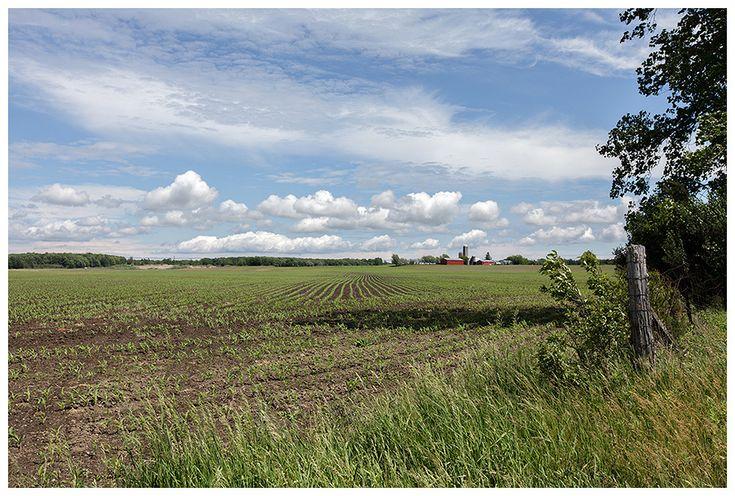 Picton Ontario Farmland