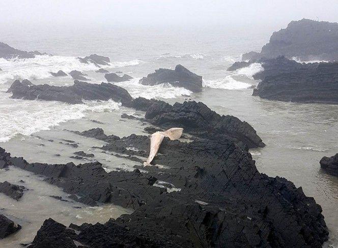 Картинки по запросу whale washed up on devon beach