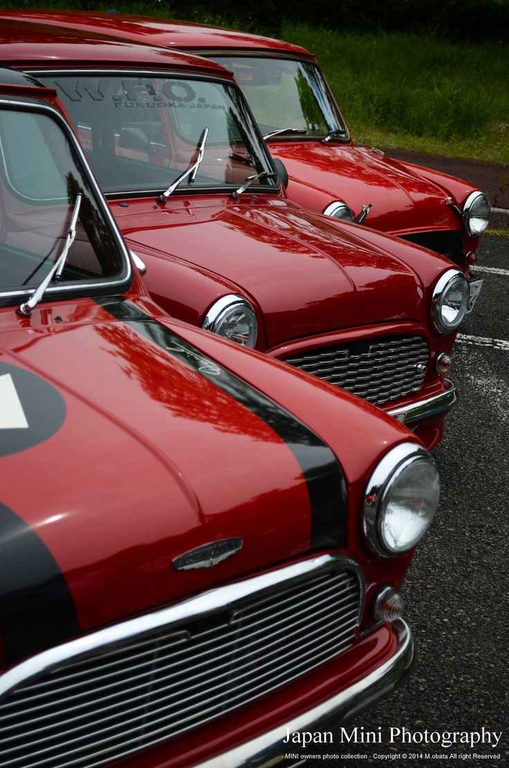Pretty little MINIs...all in a row. <3