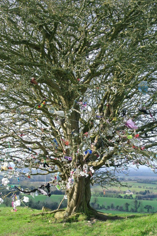 Fairy Tree in Ireland. Tie a wish onto its Hawthorn branches. When your wish us granted, its released from its branches... Floating far into the heavens...<3