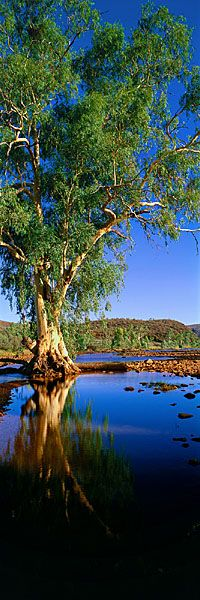 Finke River | Northern Territory, Australia | UFOREA.org | The trip you want. The help they need.