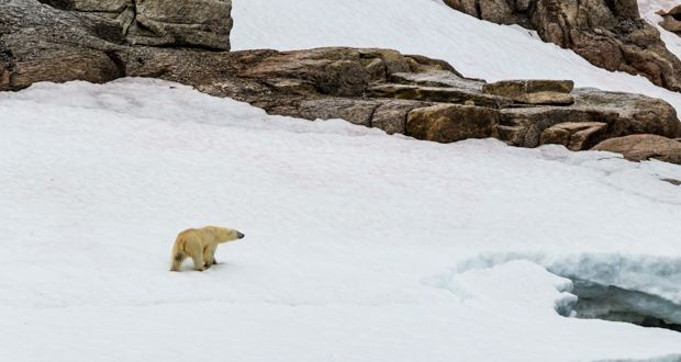 Where and when to see #polarbears - a guide to the #Arctic by our experts