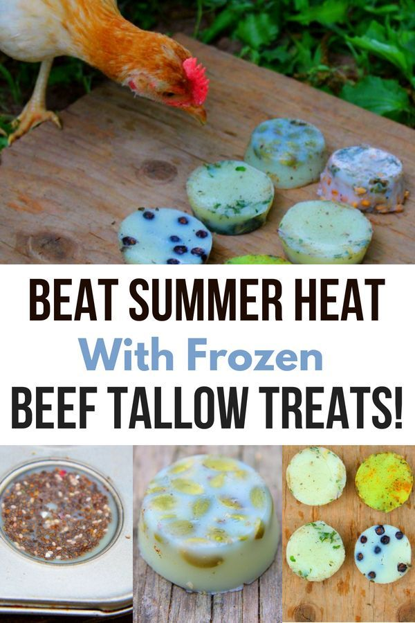 These Frozen Beef Tallow Treats Are An Easy Diy Chicken Treat For