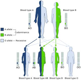 ABO blood group system - Wikipedia, the free encyclopedia