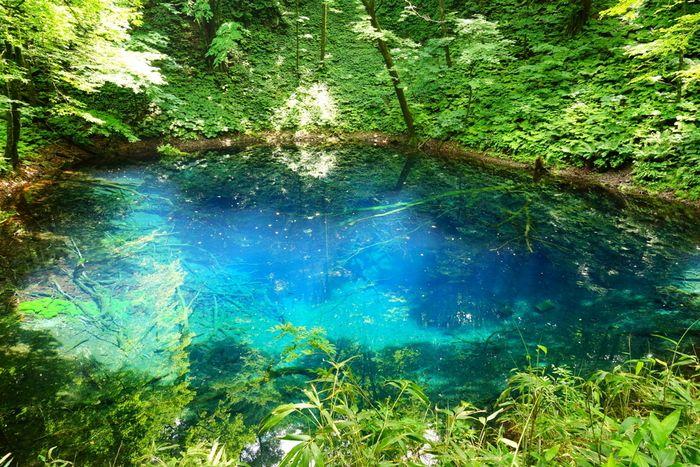 神秘的な美しさを持つ世界遺産・白神山地の『十二湖』に訪れてみませんか? | icotto[イコット]