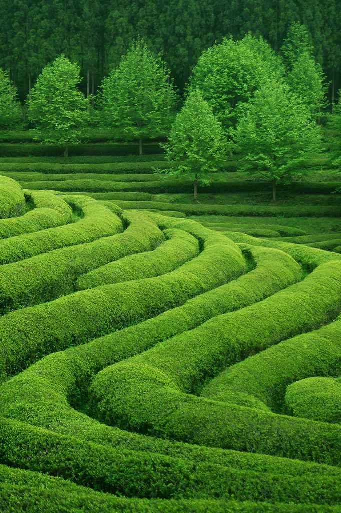 Gorgeous green landscape—waving rivers of tea—Boseong, Jeollanamdo, South Korea❣ greggusan • Flickr